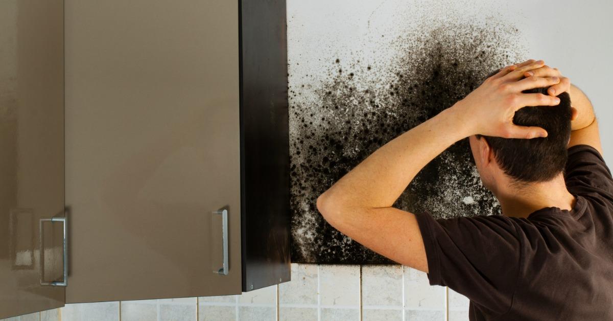 quality mold removing company ohio