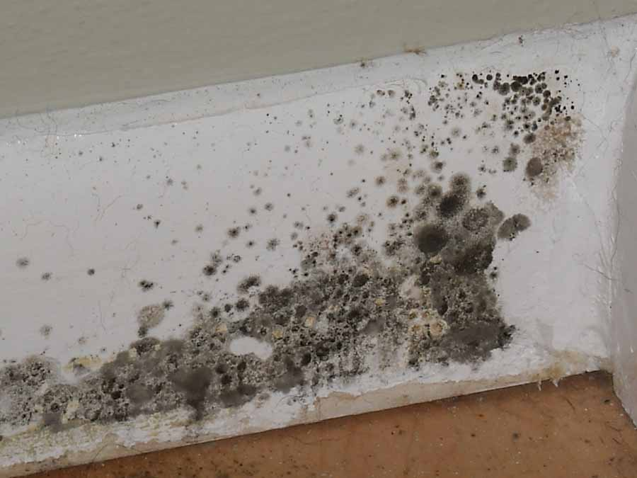 mold removal facts