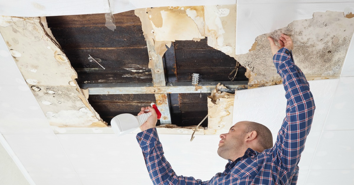 top mold removal companies