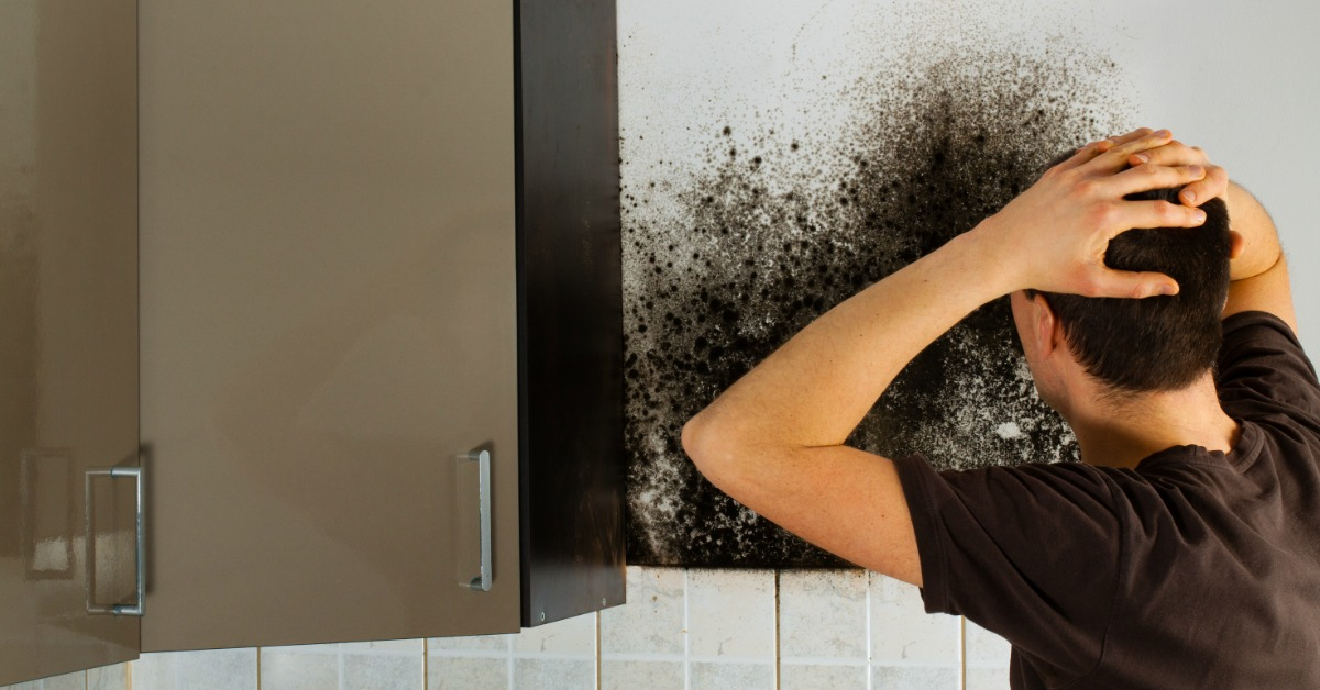 quality mold removing company ohio